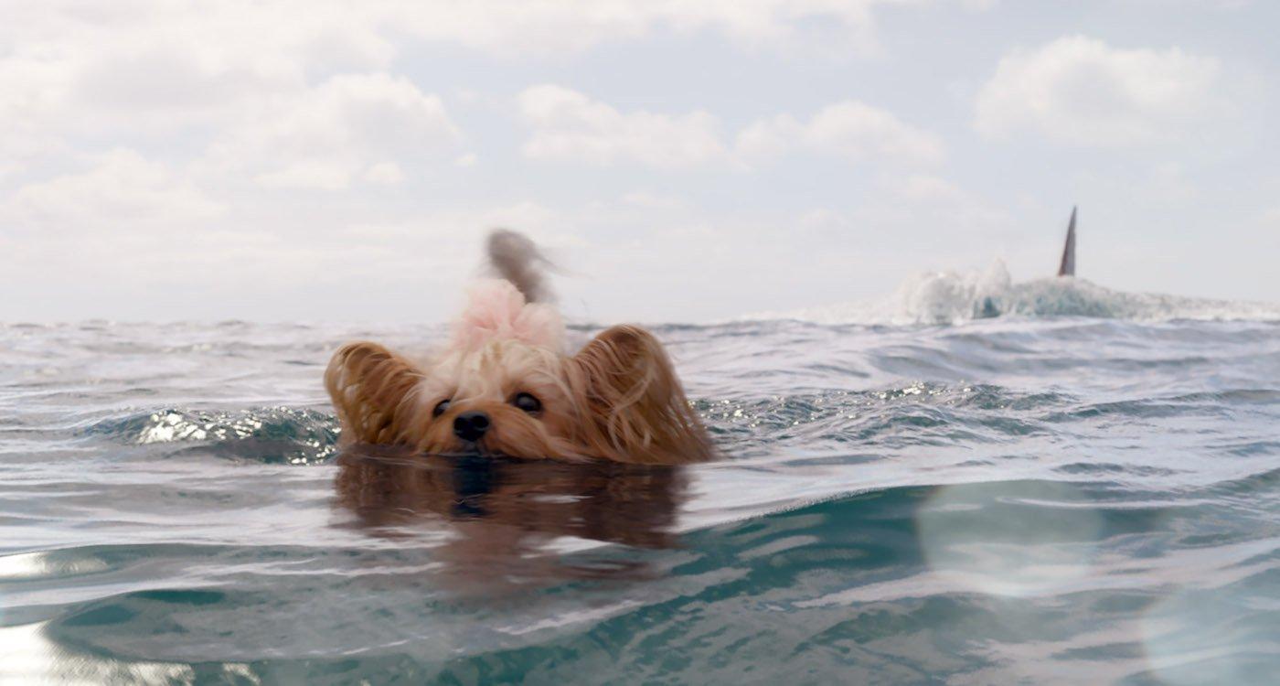 The Meg dog