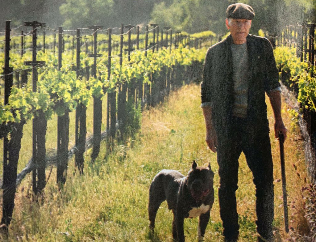 'Star Trek: Picard' Trailer: Everything We Know About the New Series